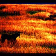 The Golden Grain Of A Sunset Dream Poster