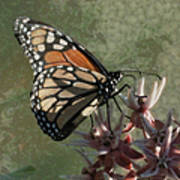 The Monarch Painterly Poster