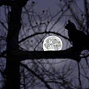 The Moon Watcher Poster