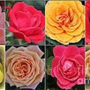 Spring Time Roses Poster