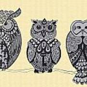 Three Owls On A Branch Poster