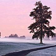 Tree At Dawn / Maynooth Poster