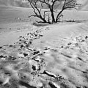 Tree Branch And Footprints On Sleeping Bear Dunes Poster