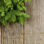 Tree Branch On Rustic Wooden Background Used For Christmas Decor Poster