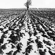 Tree In Snow Poster by John Farnan