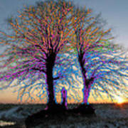 Trees Aglow Poster