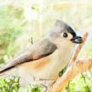 Tufted Titmouse With Seed - Digital Paint Poster