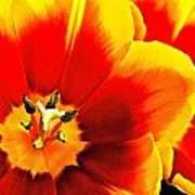 Tulip Intimacy Poster
