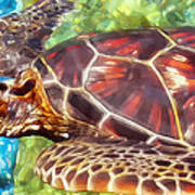 Turtle 1 Poster
