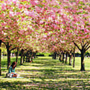 Under The Cherry Blossom Trees Poster