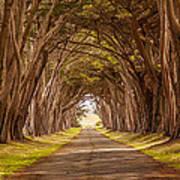 Valiant Trees Poster