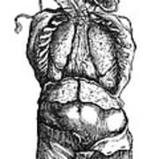 Vesalius: Thoracic Cavity Poster