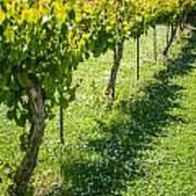 Vineyard Farm Poster