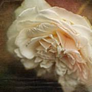 Vintage Tea Rose Poster