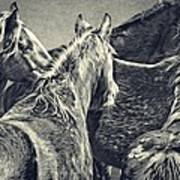 Waiting Horses Poster