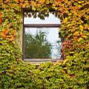 Wall Overgrown With Fall Colored Vine And Ivy Poster