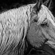 Western Horse In Alberta Canada Poster