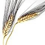 Wheat On White Poster