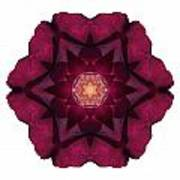 Beach Rose I Flower Mandala White Poster