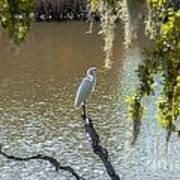 White Heron In Magnolia Cemetery Poster