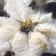 White Poinsettias Christmas Card Poster