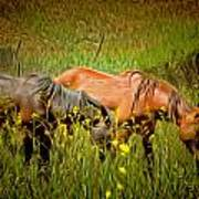 Wild Horses In California Series 2 Poster
