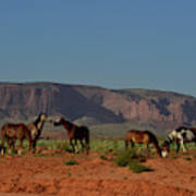 Wild Horses In Monument Valley Poster