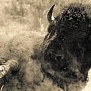 Wild West Bison Poster
