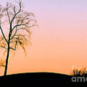 Winter Sunset Tree Poster