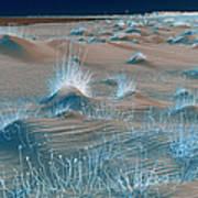 Winters Dunes IIa Poster