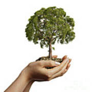 Womans Hands Holding Soil With A Tree Poster