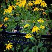 Yellow Coneflowers Echinacea Wrought Iron Gate  Poster by Rich Franco