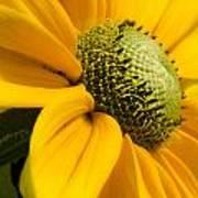 Yellow Daisy Poster