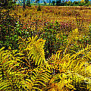 Cranberry Glades Botanical Area Poster