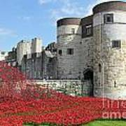 Remembrance Poppies At The Tower Of London Poster