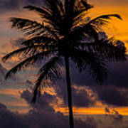 Sunset And Palm Tree Poster