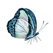 101 Perched Danis Danis Butterfly Poster