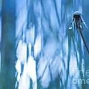 Dandelion Close-up View Backlit Poster