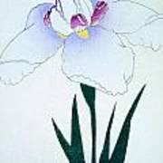 Japanese Flower Poster