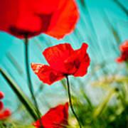 Poppy Field And Sky Poster by Raimond Klavins