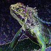 Abstract Cayman Iguana Poster