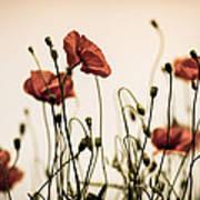 Poppy Meadow Poster