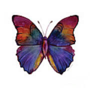 13 Narcissus Butterfly Poster