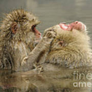 Snow Monkeys Poster