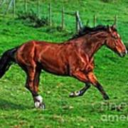 The Bay Horse  Poster