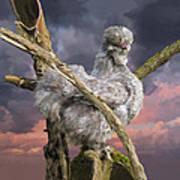 14. Cuckoo Bush Poster