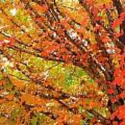 Fall Explosion Of Color Poster