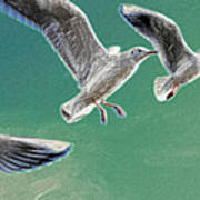 10760 Seagulls In Flight #001 Photo Painting Poster