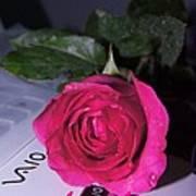Rose For You Poster by Gornganogphatchara Kalapun