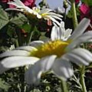 Loveflowers Poster